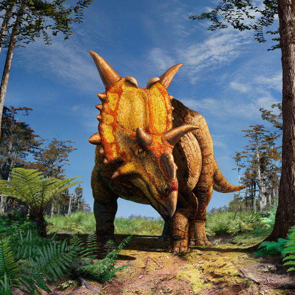 An artist's rendering of Xenoceratops foremostensis, the oldest horned dinosaur found in Canada.