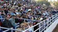 Cattle Call Rodeo fans fill the box seats