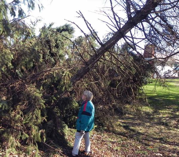 Homeowner Mary Spillane evaluates property damage at her home on 501 St. Thomas-Edenville Road near St. Thomas, Pa. The damage was caused when Superstorm Sandy passed through the area on Oct. 29.