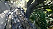 With erosion threatening the Flint Canyon Trail, La Cañada Flintridge officials are hoping a $157,000 effort to stabilize an adjacent slope will save a part of La Cañada's loop trail and a key connection to Pasadena.