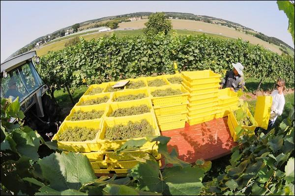 Jim Gavenus of Kingston documented the wine harvest at Clover Hill Vineyards & Winery in Breinigsville. His photos are on display at Clover Hill for its Nouveau Weekend Nov. 17-18.