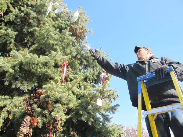 Orland Park employee Shawn Aurzada hangs ornaments on the pine tree in front of Village Hall ahead of Sunday's tree lighting ceremony.