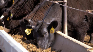 Northern Beef Packers passes latest inspection, can now increase to 500