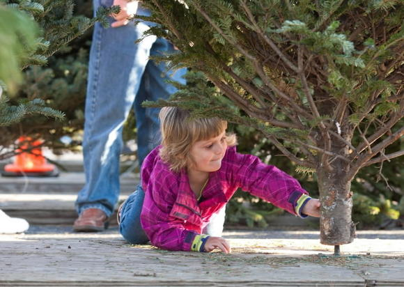 Laurel Lions Club Christmas tree sales