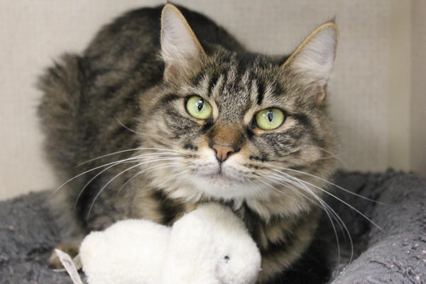 Jennifer is available for adoption at The Humane Society of Washington County.