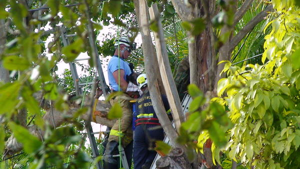 Hollywood Fire Rescue carefully worked to remove the body of a man from a tree after he died while trimming branches