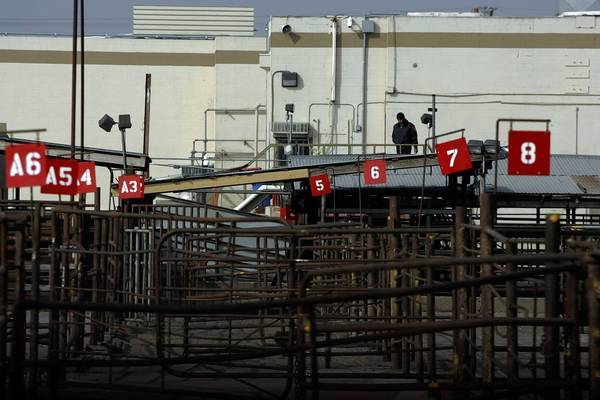 A security guard watches over empty cattle pens at Hallmark/Westland Meat Packing Co. in Chino.
