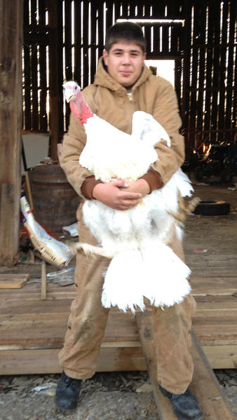 Blake Harne of Boonsboro carries a 60-pound tom turkey to the butcher, where it will be prepared for Thanksgiving dinner. Blake and his sister Marrissa raised 10 turkeys from peeps over the last six months, according to Mark Harne, Blake and Marrissa's father.