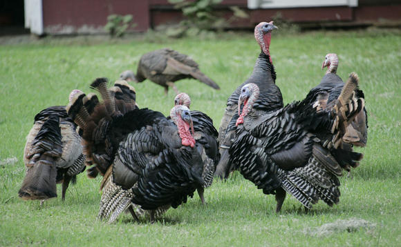 The annual Blue Talon Turkey Trot happens on Thanksgiving Day