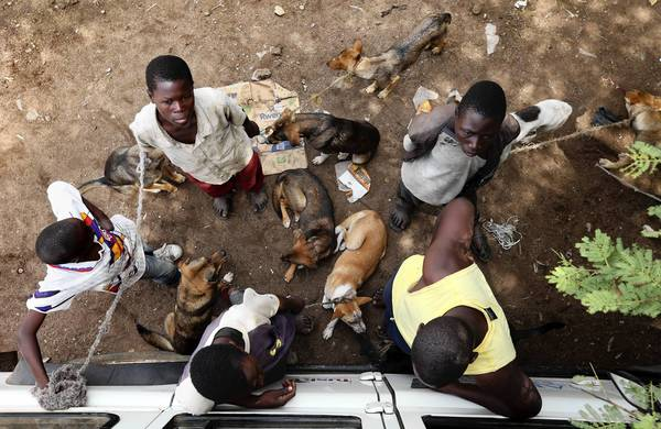 "Boys wait patiently with their dogs in a line during a mass <a class=""taxInlineTagLink"" id=""HEDAI00000095"" title=""Rabies"" href=""/topic/health/diseases-illnesses/rabies-HEDAI00000095.topic"">rabies</a> <a class=""taxInlineTagLink"" id=""HEDAR00000154"" title=""Vaccines"" href=""/topic/health/vaccines-HEDAR00000154.topic"">vaccination</a> day in Bunda, Tanzania."