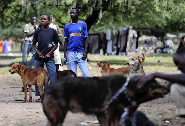 "Boys wait patiently with their dogs during a mass <a class=""taxInlineTagLink"" id=""HEDAI00000095"" title=""Rabies"" href=""/topic/health/diseases-illnesses/rabies-HEDAI00000095.topic"">rabies</a> <a class=""taxInlineTagLink"" id=""HEDAR00000154"" title=""Vaccines"" href=""/topic/health/vaccines-HEDAR00000154.topic"">vaccination</a> day in Bunda, Tanzania."