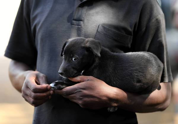 "A puppy is held by his owner as people wait to have their <a class=""taxInlineTagLink"" id=""T50023003"" title=""Dog (animal)"" href=""/topic/science-technology/science/zoology/dog-%28animal%29-T50023003.topic"">dogs</a> administered <a class=""taxInlineTagLink"" id=""HEDAI00000095"" title=""Rabies"" href=""/topic/health/diseases-illnesses/rabies-HEDAI00000095.topic"">rabies</a> <a class=""taxInlineTagLink"" id=""HEDAR00000154"" title=""Vaccines"" href=""/topic/health/vaccines-HEDAR00000154.topic"">vaccines</a> in Bunda, Tanzania."