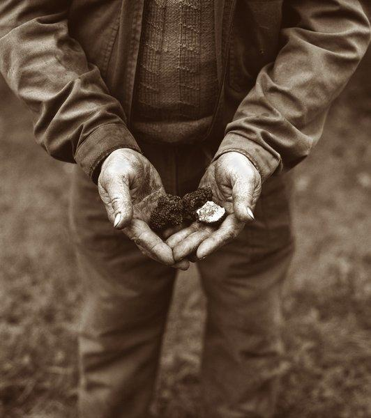 Truffle hunter with the black jewel -- a black winter truffle from Perigord