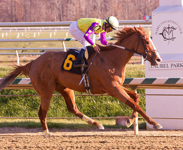 Bold Affair, ridden by Abel Castellano, wins the $100,000 Geisha Stakes for fillies and mares at Laurel Park on Thursday, November 22, 2012.