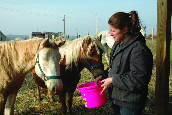 Pam Graves, veterinarian with Jensen's Animal Hospital in Petoskey and founder and executive director of Second Chance Ranch and Rescue in Boyne City gives feed to a few of the ten horses that were seized from a farm in Presque Isle County.