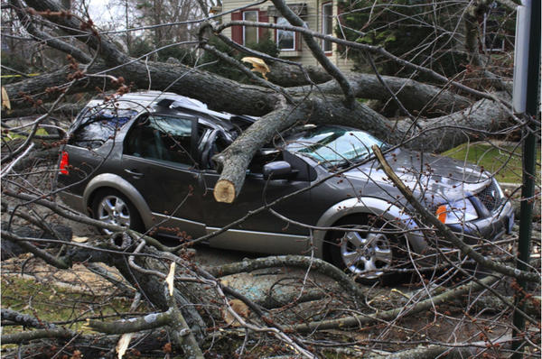 Two people were injured after a tree fell on a car on 16th Street just south of Wilmette Avenue in Wilmette.