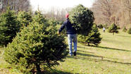 VIDEO Finding a Christmas tree at Ruhl's Tree Farm