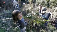 Photo Gallery: Volunteers remove non-natives from Rosemont Preserve