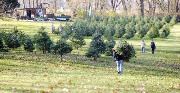 Baltimore county tree farm