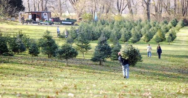 Josh Taylor of Edgemere opts to carry a tree across the field to purchase at Ruhl's Tree Farm in Phoenix, Md.
