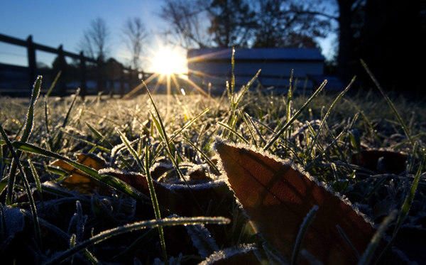 A coating of frost left on vegetation overnight greets the morning sun near the overlook at Riverview Farm Park in Newport News Monday.