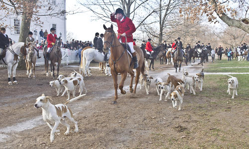 Photo Gallery: Blessing of the Hounds 112412