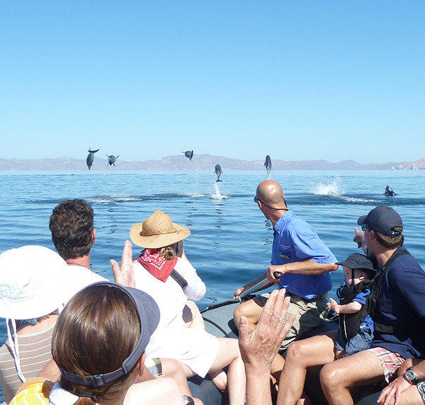 A dolphin welcome committee greets cruisers aboard a skiff.
