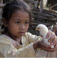For $20 you can buy a family a flock of chicks, which would yield eggs as a source of protein and nutrition. (www.heifer.org)