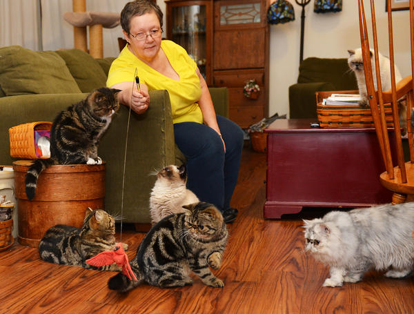 Surrounded by many felines Mary Lynn Krause of Berryhill Cattery, of Coopersburg plays with Berryhill Sookie Stackmouse, (center cat) 8 months old, an exotic shorthair, she is currently International 2nd Best Kitten in The International Cat Association.