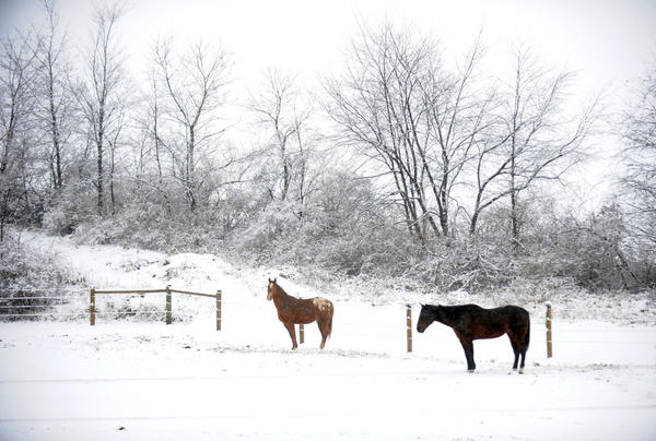 Horses stand in the snow at the corner of Miller and Flint Hill Roads in New Tripoli on Tuesday.