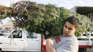 Photo Gallery: Casella's Christmas Trees gets first tree delivery