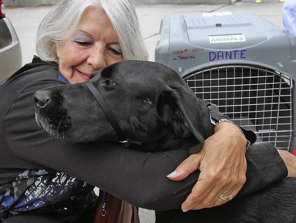 'Dante', a 3 year-old black Labrador who suffered severe snakebites while protecting Gudrun Mastriano,left, a family member, receives a hug from her Wednesday, November 28, 2012 at Orlando International Airport before being shipped overseas to Dante's human parents United States Navy Commander Carl Eierle and his wife Charlotte. Dante, received life-saving Hyperbaric Oxygen Therapy at SPCA Florida, Lakeland. (Red Huber, Staff Photographer)