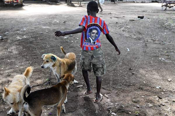 A boy wearing a Barack Obama t-shirt brings his dogs to be vaccinated for rabies in Bunda.