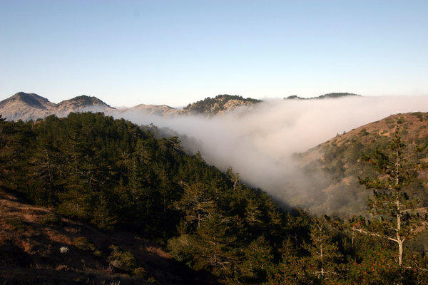 Coastal fog hugs the slope of the relic bishop pine forest of Santa Cruz Island off the coast of Santa Barbara.