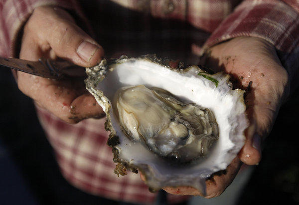 Drakes Bay Oyster owner Kevin Lunny holds a Pacific oyster. Members of the California oyster industry reacted unhappily to the news that the company's farm would have to close.