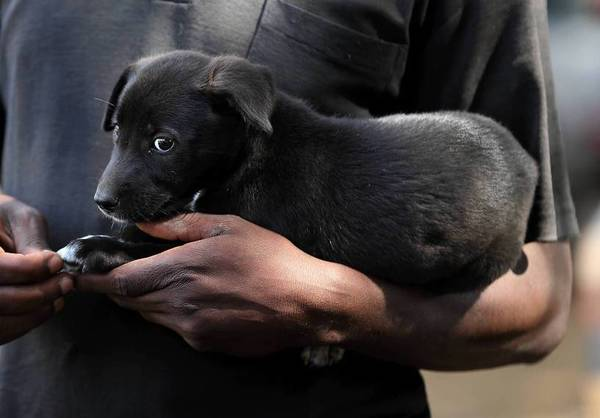 A puppy is held by his owner as people wait to have their dogs administered rabies vaccines in Bunda, Tanzania.