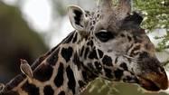 Photos: Scenes from Tanzania