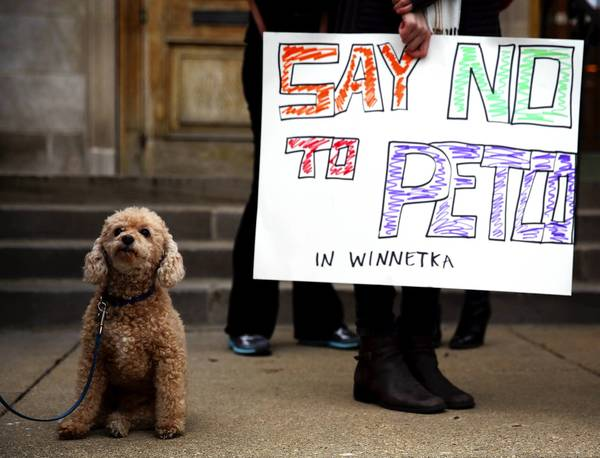 Wrigley, a poodle, at Winnetka Village Hall during a protest Friday over a pet store that may be coming to town.