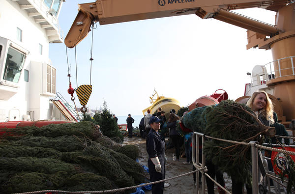 Students help unload 1,600 Christmas trees from the U.S. Coast Guard Mackinaw Cutter at Navy Pier on Saturday.
