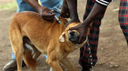 Lincoln Park Zoo's rabies vaccination program saves lives in Tanzania