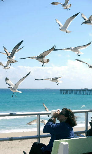 A woman photographs seagulls riding on the breeze on Lake Worth's beach.
