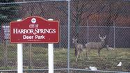 HARBOR SPRINGS — City manager Tom Richards has found a way to help manage the deer population at the Harbor Springs Deer Park: to treat the deer with contraceptives — administered by dart.