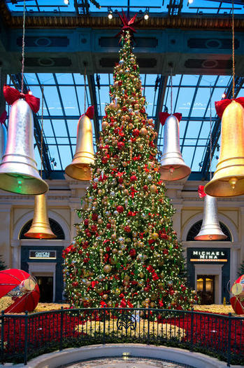 The tree at the Bellagio Conservatory in Las Vegas  is a 45-foot Shasta fir.