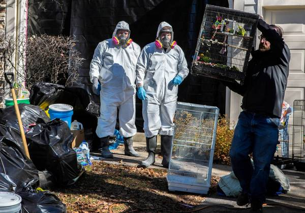 Volunteers and contractors for the city of Aurora removed 325 live birds and 120 dead ones from the house of David Skeberdis in October.