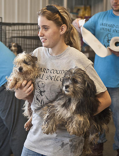 Photo Gallery: Garrard County Animal Shelter 120512