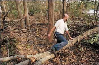 John Cannup, director of real estate and planning for The Mariners' Museum, steps over fallen trees that are littering the Noland Trail after they were knocked down by Hurricane Isabel's winds.
