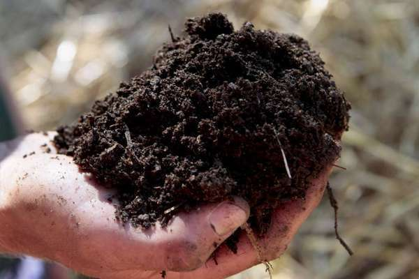 Beautiful rich black compost, as good as gold!
