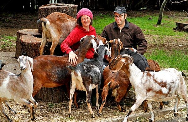 For Gloria Putnam and Steve Rudicel, goats, eggs and produce make a winning enterprise.