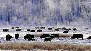 Yellowstone National Park on a winter's day
