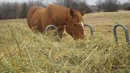 Local horse rescue receives holiday hay donation